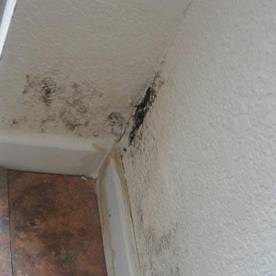 mold-damage2